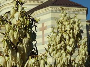 О служении  Церкви, статусе Севастополя и приезде Патриарха в Крым